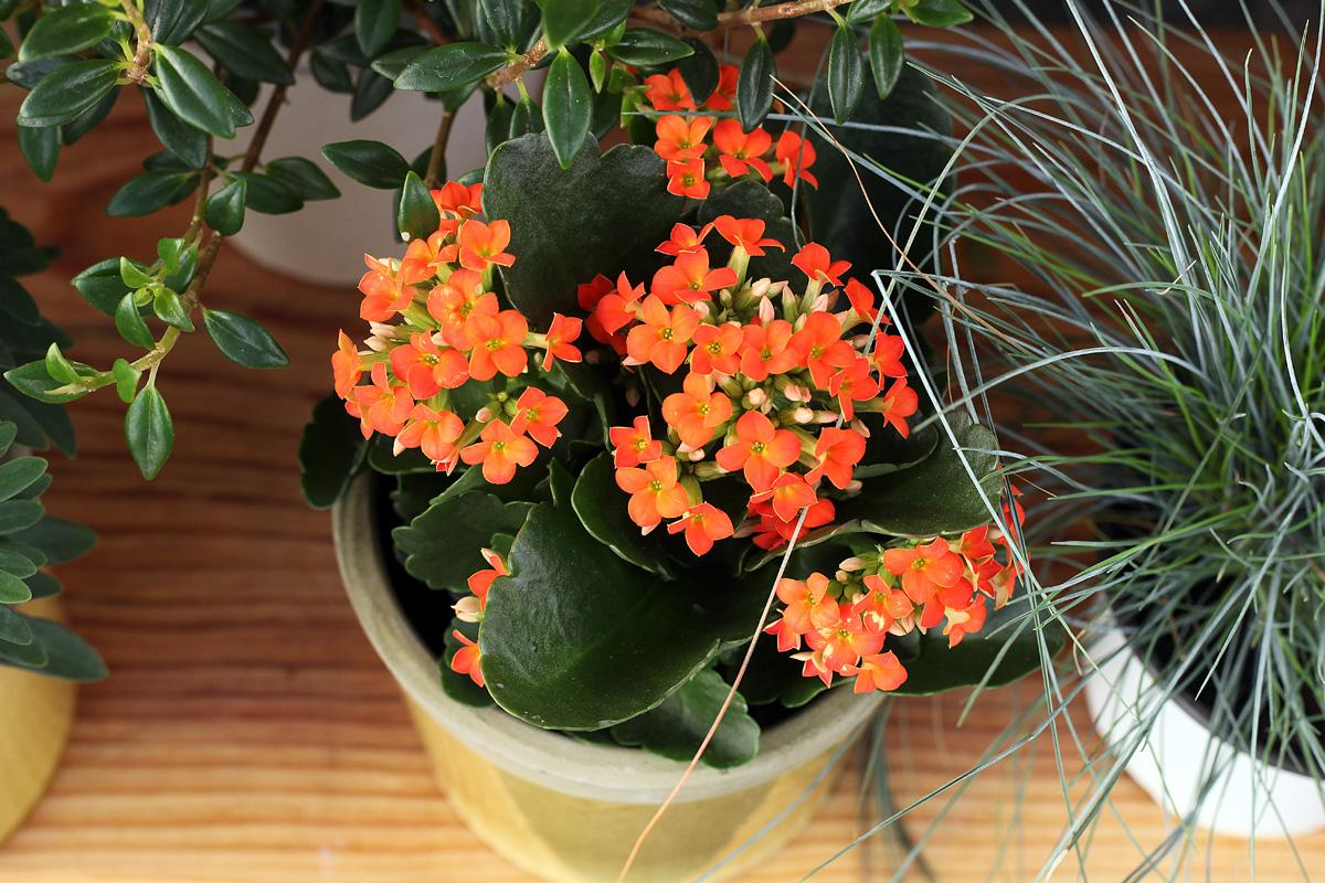 Plantes 14