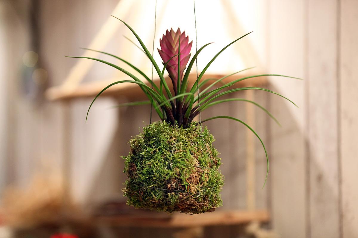 Plantes 19