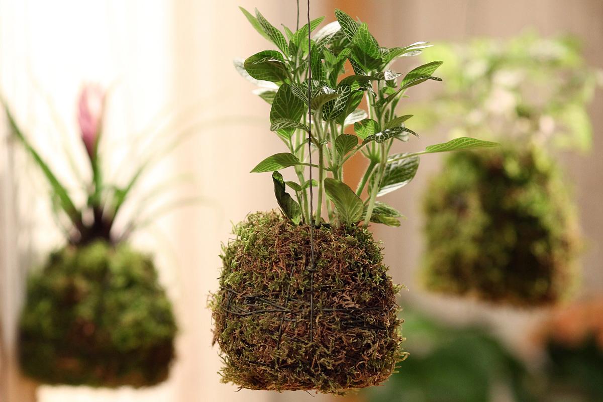 Plantes 20