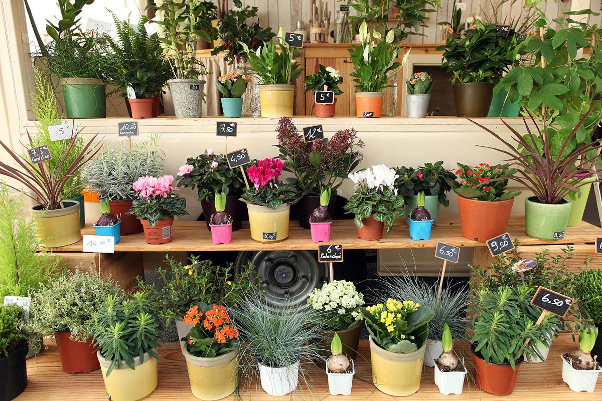 Plantes 25