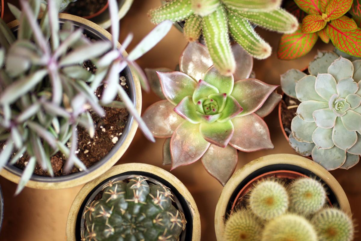 Plantes 02