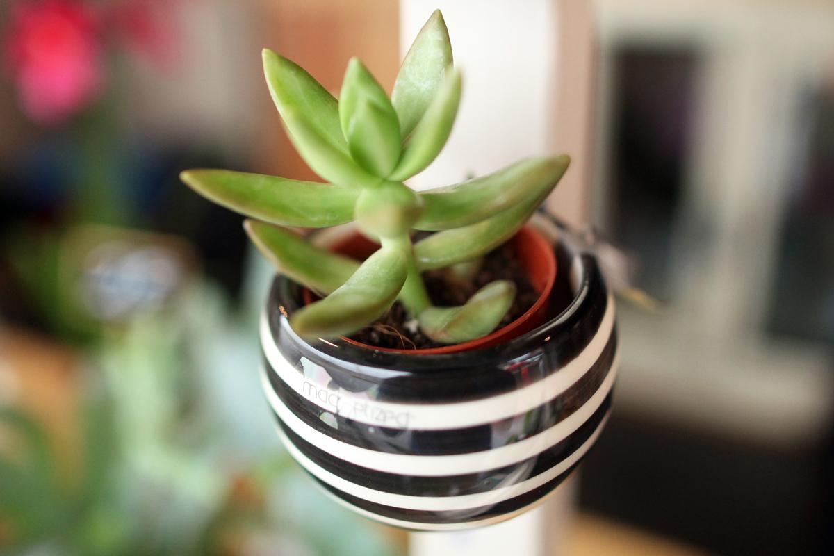 Plantes 04