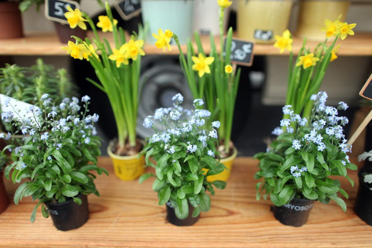 Plantes 09