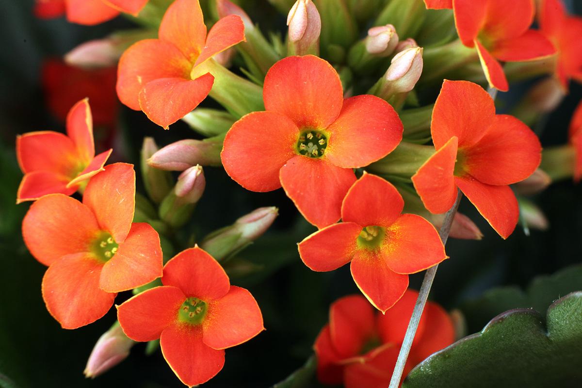 Plantes 15